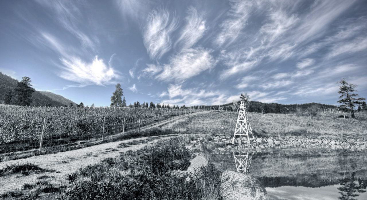 HQ Wine